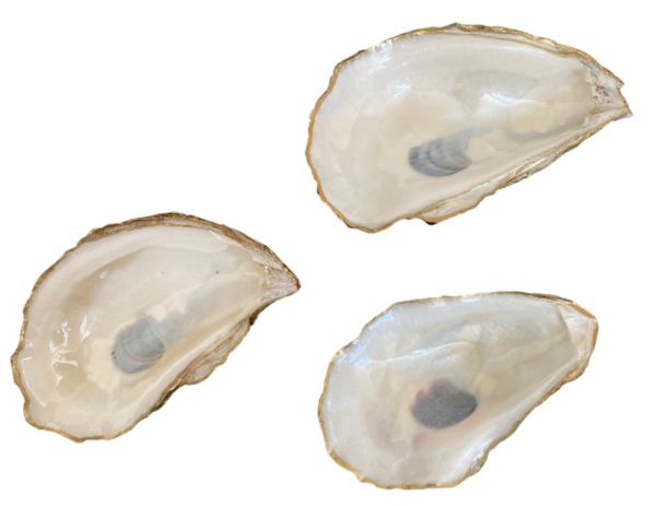 Pearl White Oysters ChrisClineDesign